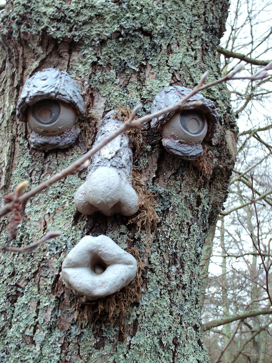 If trees talk, are they talking about you or to you?